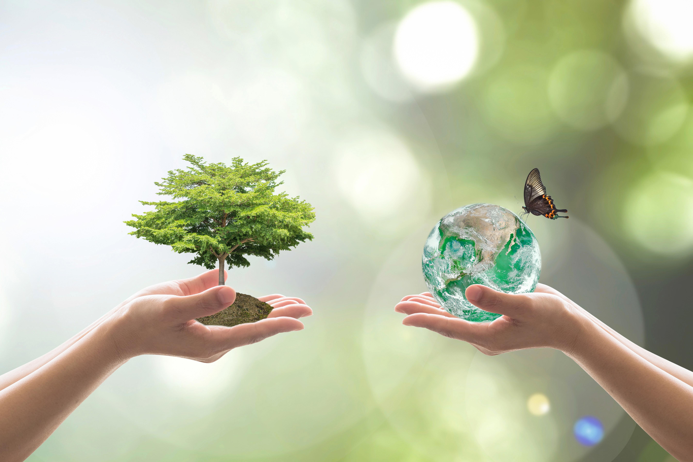 Aloe Verde Sicurezza E Benessere Centro Acqua Movimento E Salute